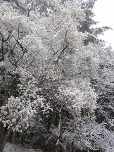 雪やこんこ      4月10日(水)_d0127634_07351926.jpg