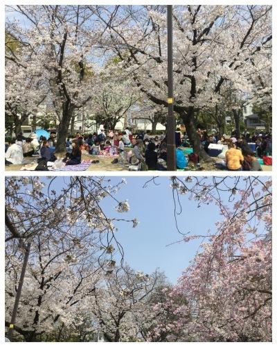 テーブルリメイク & 平成最後のお花見 & 白い紫陽花_a0084343_11243474.jpeg