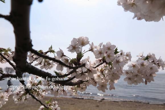 琵琶湖畔の桜散歩&今日の鶏の竜田揚げ弁当_c0326245_10523949.jpg