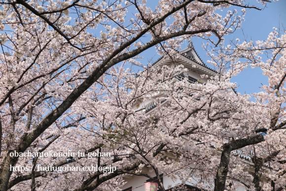 琵琶湖畔の桜散歩&今日の鶏の竜田揚げ弁当_c0326245_10525439.jpg