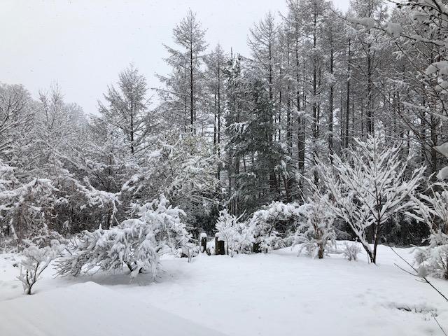 四月の雪_f0019247_14433996.jpg