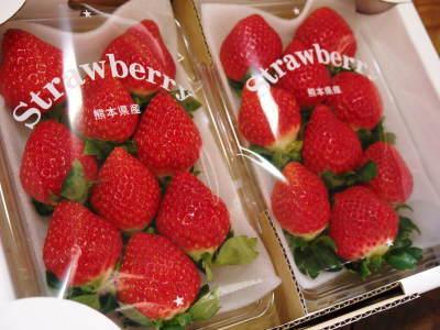 熊本イチゴ『熊紅(ゆうべに)』 美味しさと安全にこだわる朝採りの新鮮イチゴをお届けします!_a0254656_18200433.jpg