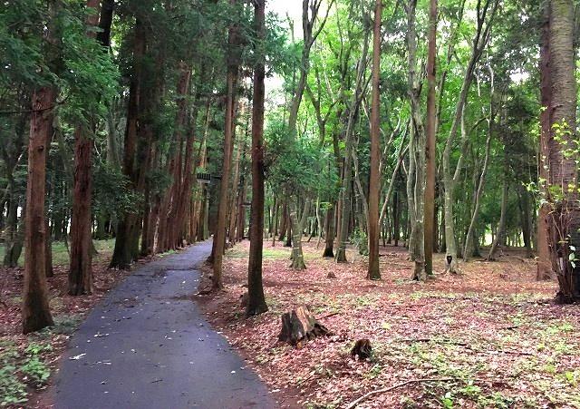 「毛野国」探訪⑥:栃木県の隠れた歴史&地下採掘場の魅力発掘(下野国編)_c0119160_17452505.jpg