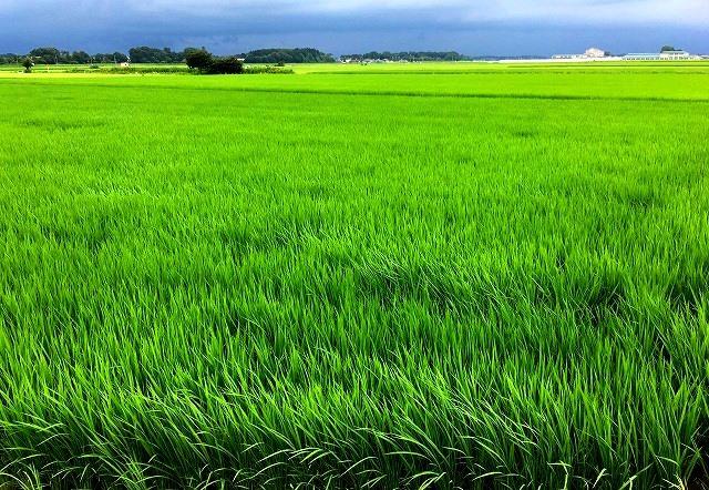 「毛野国」探訪⑥:栃木県の隠れた歴史&地下採掘場の魅力発掘(下野国編)_c0119160_17502177.jpg