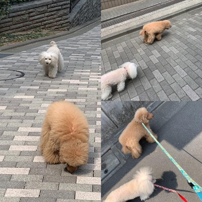 2019.4.7  休日の朝ンぽ、2時間半は当たり前の老犬たち_a0083571_17524112.jpg