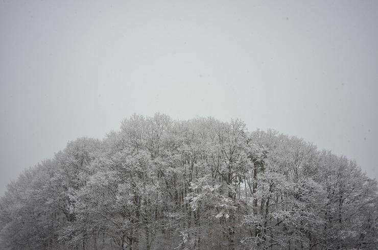 雪景色^^_a0211886_15215751.jpg