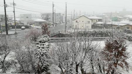 季節外れの雪です_c0193896_06403974.jpg