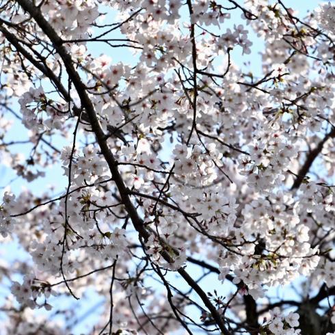 春が来た 06_f0099102_12433660.jpg