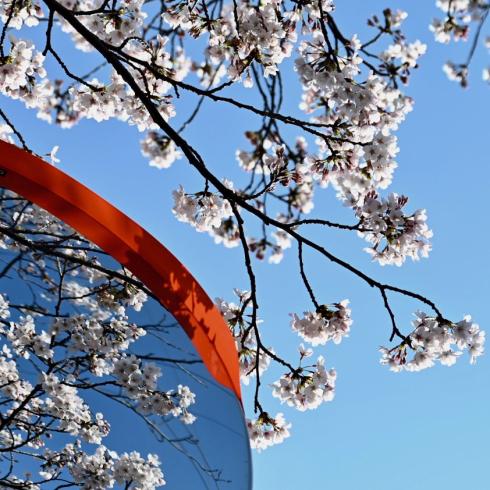 春が来た 06_f0099102_12434005.jpg
