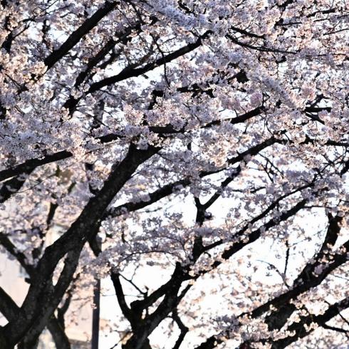春が来た 06_f0099102_12440665.jpg