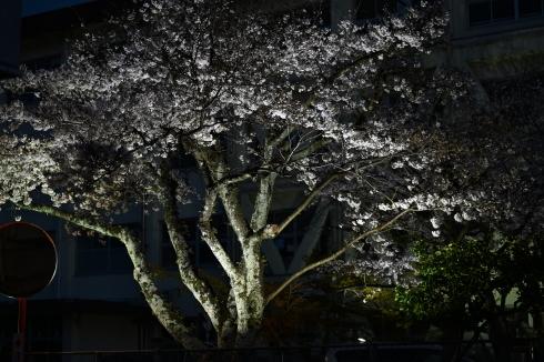 春が来た 06_f0099102_12445701.jpg