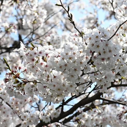 春が来た 06_f0099102_12463076.jpg