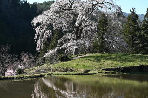 春が来た 06_f0099102_12471275.jpg