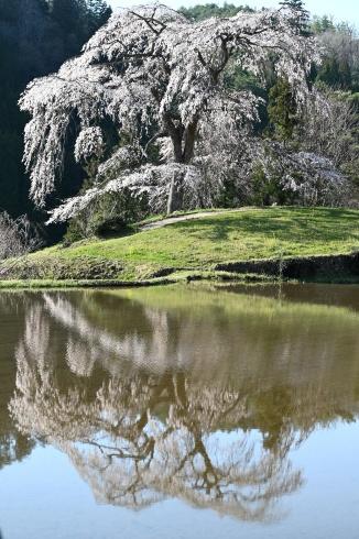 春が来た 06_f0099102_12472056.jpg