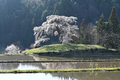春が来た 06_f0099102_12473983.jpg
