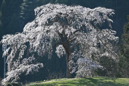 春が来た 06_f0099102_12474926.jpg