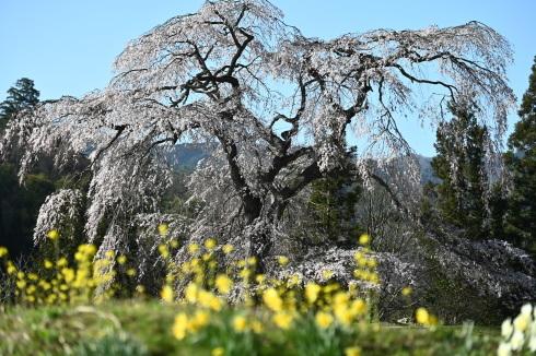 春が来た 06_f0099102_12480917.jpg