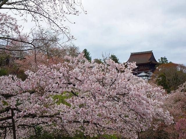 吉野山の千本桜_e0289203_14580446.jpg