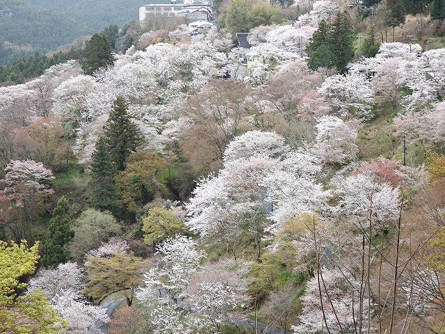 吉野山の千本桜_e0289203_15160975.jpg