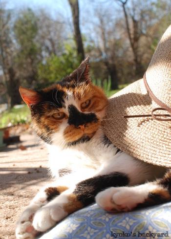 麦わら帽子と隊長_b0253205_03401740.jpg