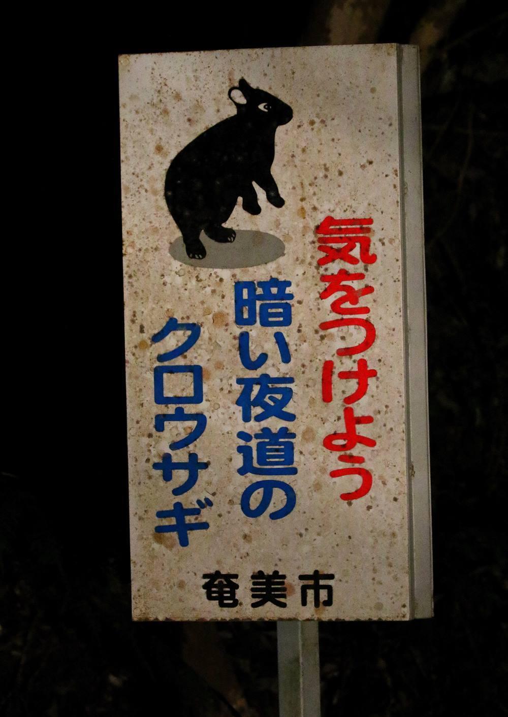 初めての奄美大島遠征(その4)・・・_c0213607_20031117.jpg