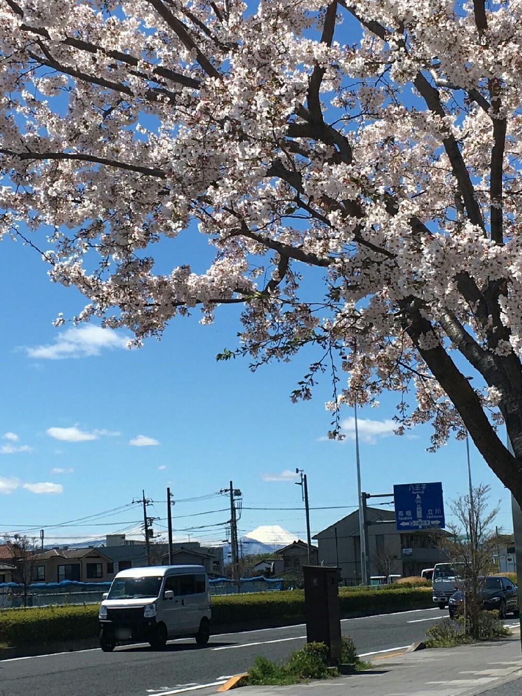 4/11  今日の富士山_b0042308_18251215.jpg