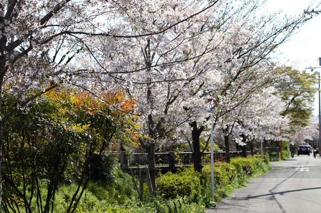 花が散った 下鴨_e0048413_22384981.jpg
