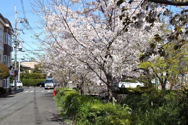 花が散った 下鴨_e0048413_22385182.jpg