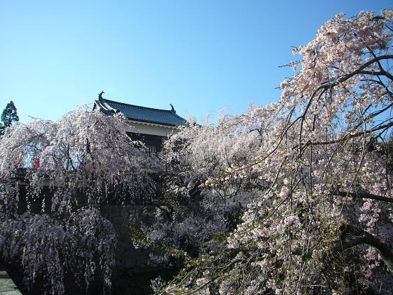 上田城の桜_c0192215_13385850.jpg