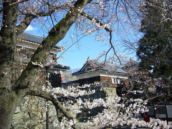 上田城の桜_c0192215_1348689.jpg