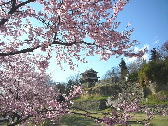 上田城の桜_c0192215_13522432.jpg