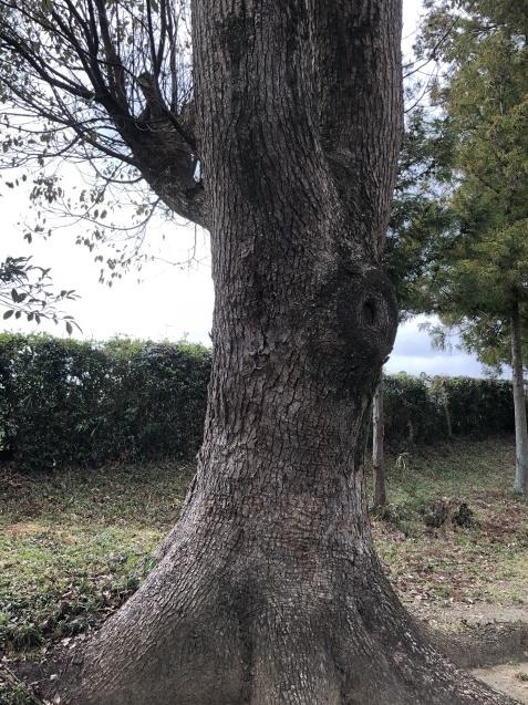 (10)崇神天皇とオオタタネコ_b0409627_12360731.jpg