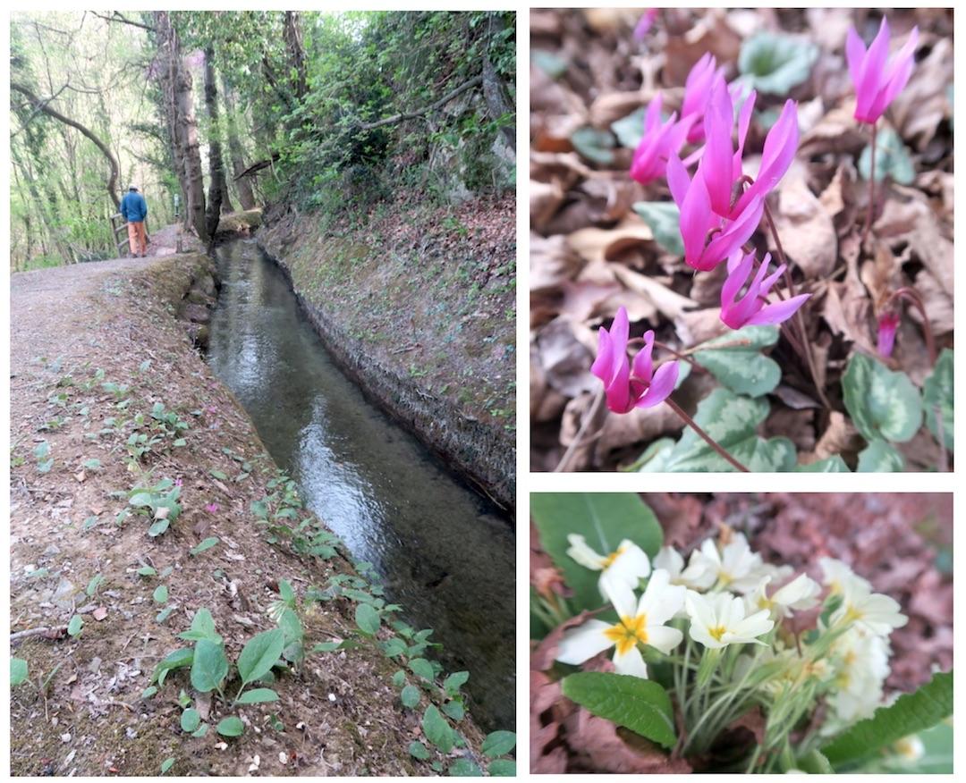 春の野の花とインフルエンザ_f0234936_19154973.jpg