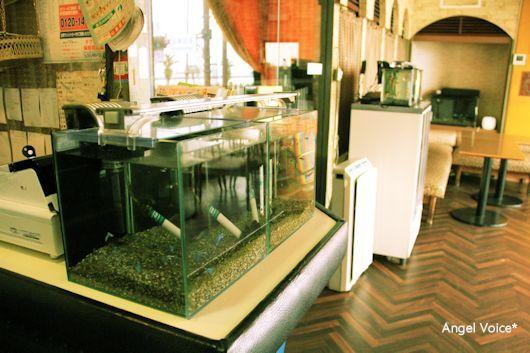 喫茶サンバード_d0147742_22095545.jpg