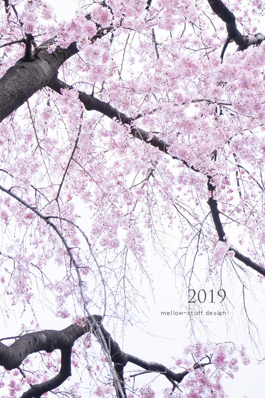 2019年の桜いろいろ。_d0124248_21121903.jpg
