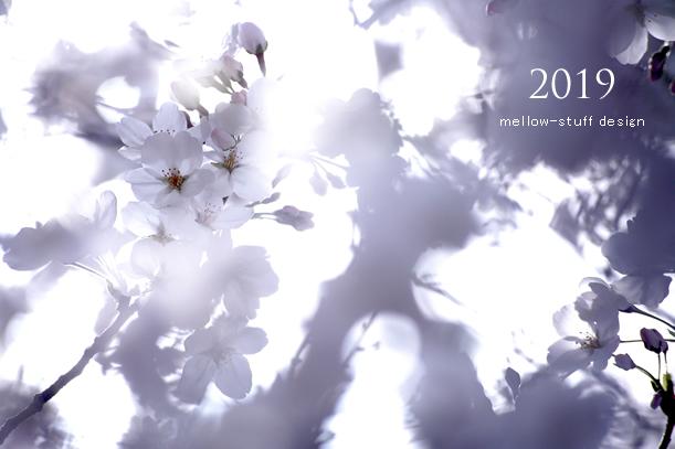 2019年の桜いろいろ。_d0124248_21132364.jpg