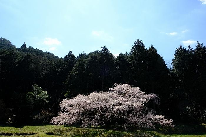 桜巡り2019_e0410863_19143151.jpg