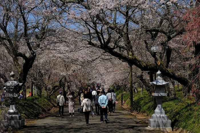 桜巡り2019_e0410863_19175761.jpg