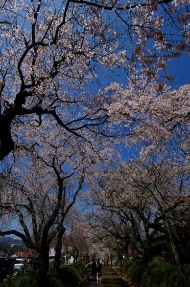 桜巡り2019_e0410863_19195393.jpg
