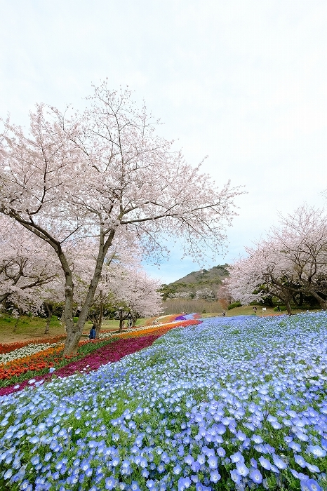 桜巡り2019_e0410863_19255626.jpg