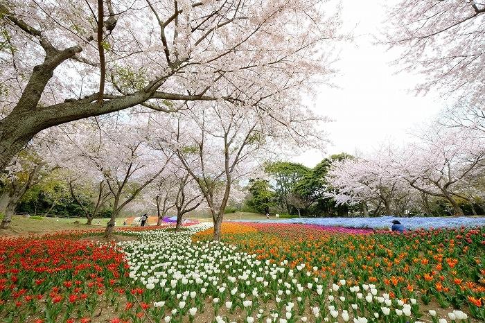 桜巡り2019_e0410863_19261338.jpg