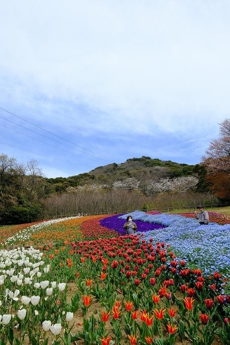 桜巡り2019_e0410863_19263518.jpg