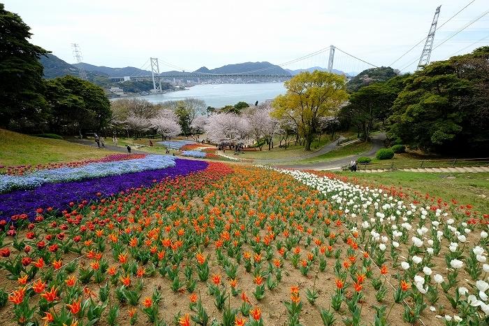 桜巡り2019_e0410863_19265736.jpg