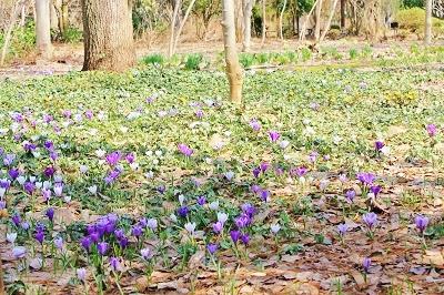 弘前城植物園オープン_2019.04.10_d0131668_1624721.jpg