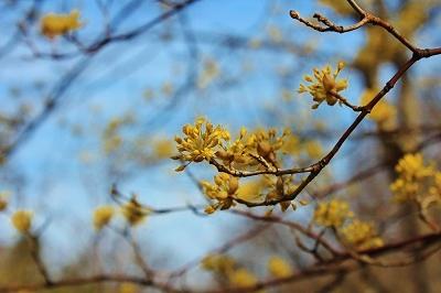 弘前城植物園オープン_2019.04.10_d0131668_16251848.jpg