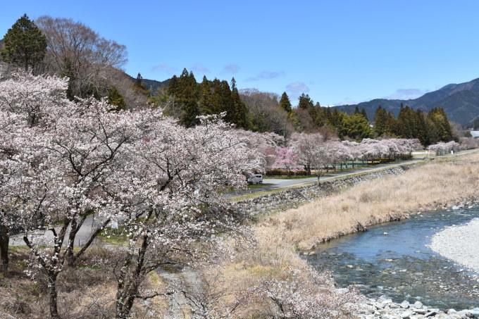 桜の開花情報_c0238069_13015966.jpg