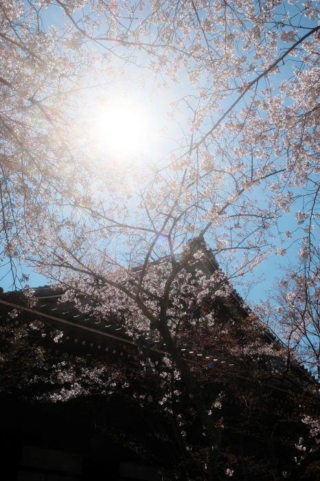 桜 2019_f0021869_23374696.jpg