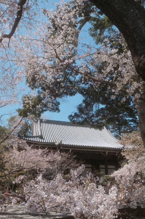 桜 2019_f0021869_23374720.jpg