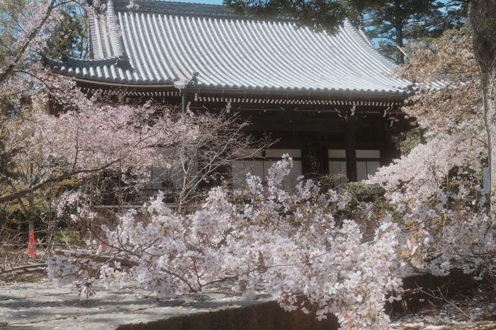 桜 2019_f0021869_23374914.jpg