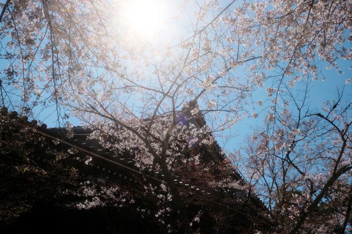 桜 2019_f0021869_23375210.jpg